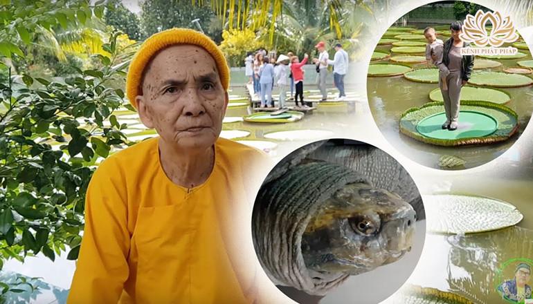 6 cụ rùa 107 tuổi ăn chay nghe kinh Phật và biết nghe lời Sư ông ở chùa Lá Sen