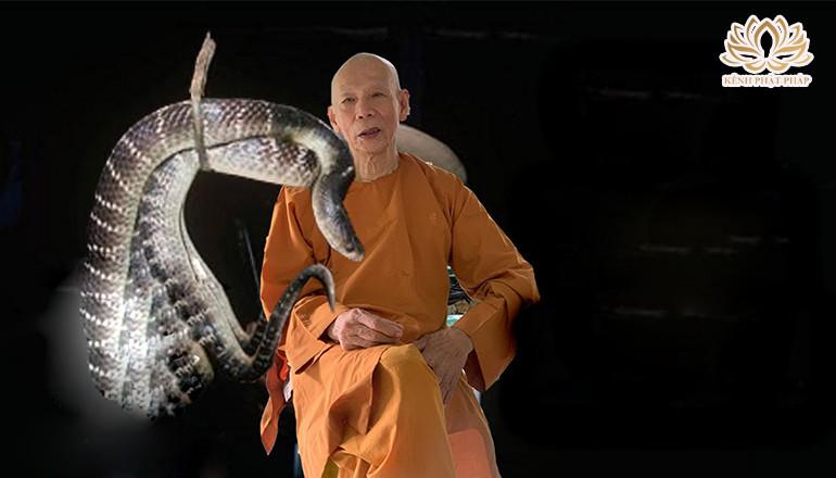 Sư ông 90 tuổi Tu cùng với Rắn trong lòng núi Dinh