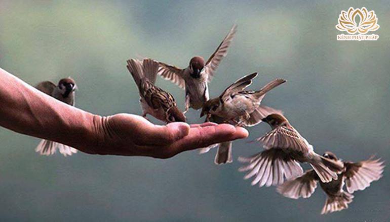 Chuyện về chú chim non mắc bẫy